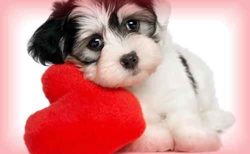 【良く当たる心理診断】なんで愛しているのに愛されないの?