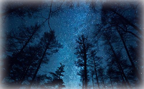 ジーニー先生の良く当たる星占い【12月14日~12月20日】
