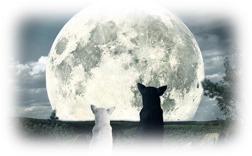 満月で読む天空模様【2017年8月】