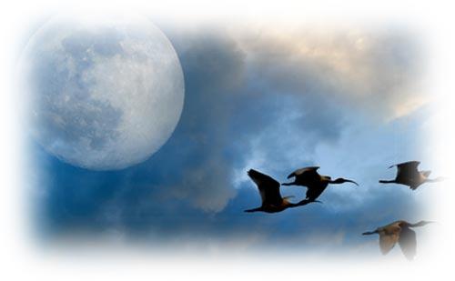 満月で読む天空模様【2017年10月】